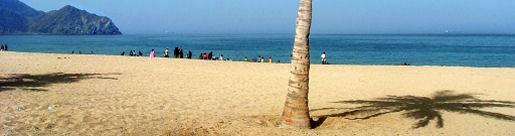 Beach Palm, UAE